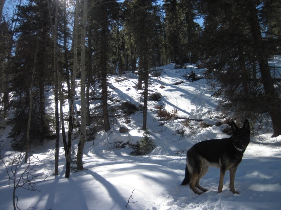 Akon at Angelfire last winter, during our snowshoeing adventure.